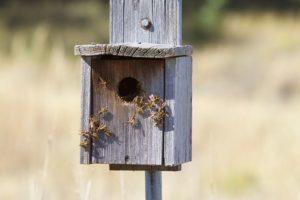 wasps-1807491__480